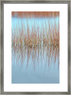 The Marsh Mirror Framed Print by Loree Johnson