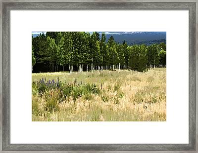 The Meadow Digital Art Framed Print by Phyllis Denton