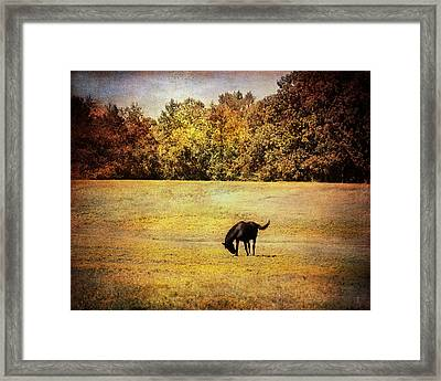 The Meadow Framed Print by Jai Johnson