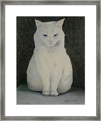 The Meditating Cat Framed Print