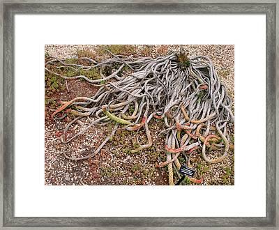 The Medusas Wigs Framed Print by Hiroko Sakai