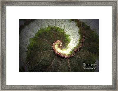 The Middle Path Framed Print by C E Dyer