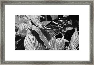 The Monarch Framed Print by Michael Carrothers