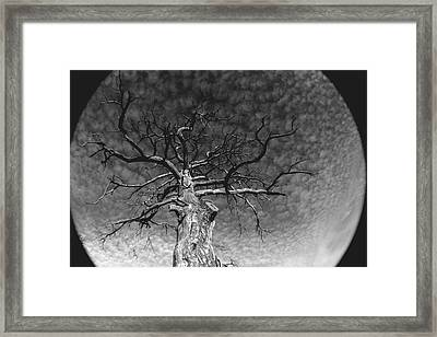 The Moon Tree Framed Print by Artist Orange