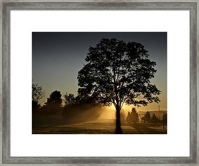 Framed Print featuring the photograph The Morning Light by Nick Mares
