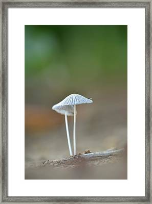 The Mushrooms Framed Print by JD Grimes