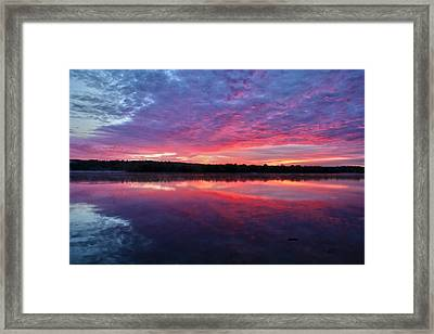 The Mystery Framed Print by Mitch Cat