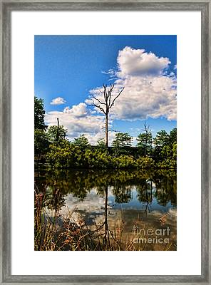The Naked Tree Framed Print by Paul Ward