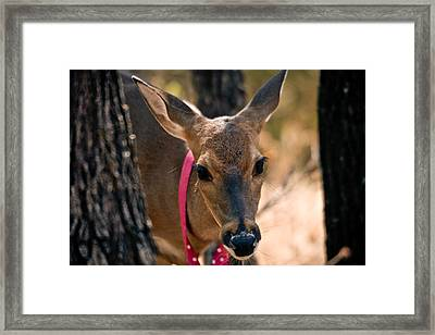 The Neighbors' Pet Framed Print by Susan Adams