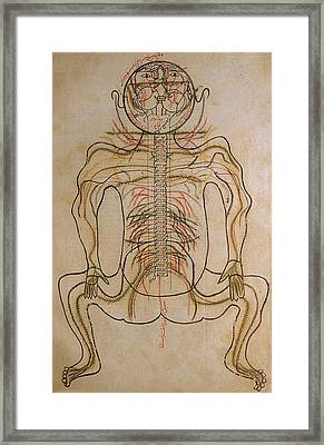 The Nervous System, From Mansurs Framed Print by Everett