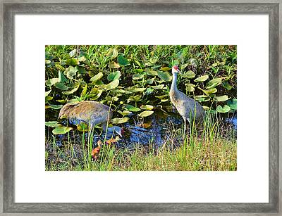 The New Family Framed Print