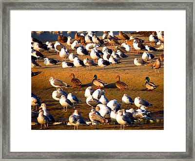 The Newcomers Framed Print by Catherine Natalia  Roche