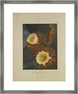 The Night-blooming Cereus Framed Print by Robert John Thornton