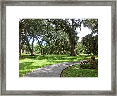 The Oaks Framed Print