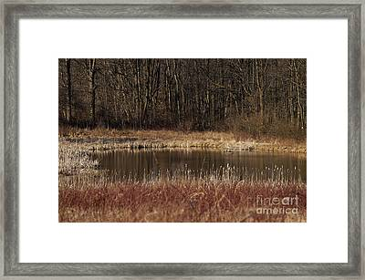 The Oasis Framed Print