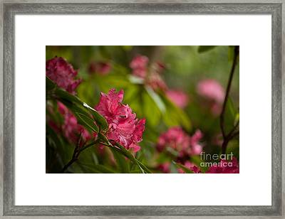 The Observers Framed Print by Mike Reid