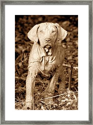 The Old Hunter Framed Print by David Lee Thompson