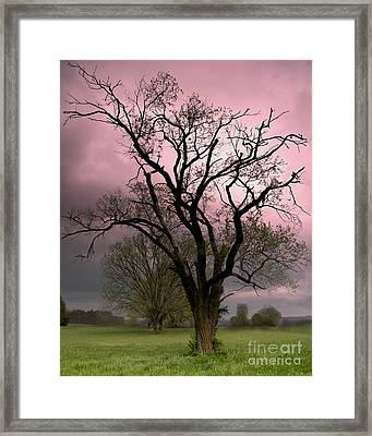 The Old Tree Framed Print by Brian Stamm