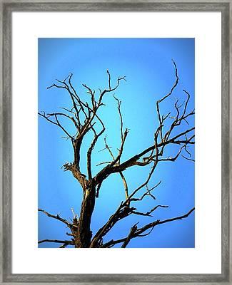 The Old Tree Framed Print by Mara Barova