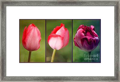 The One And Only Framed Print by Jutta Maria Pusl