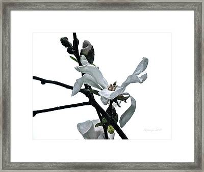 The Opening Framed Print by Rotaunja