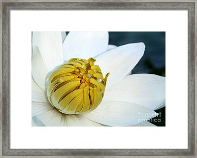 The Opening Framed Print by Sabrina L Ryan