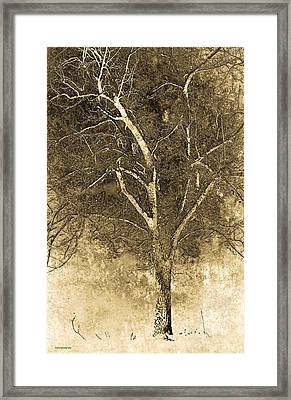 The Orchard Way Framed Print by Ron Jones