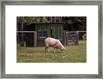 Framed Print featuring the photograph The Original Lawn Mower by Trever Miller