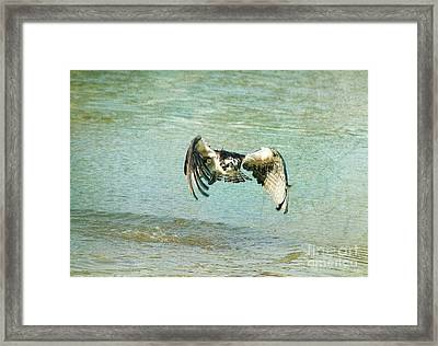 The Osprey Glare Framed Print by Deborah Benoit