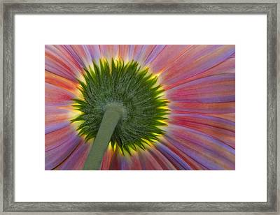 The Other Side Framed Print by Susan Candelario