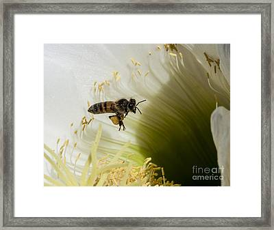 The Overloaded Bee Framed Print