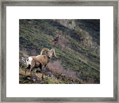 Framed Print featuring the photograph The Overlook by Steve McKinzie