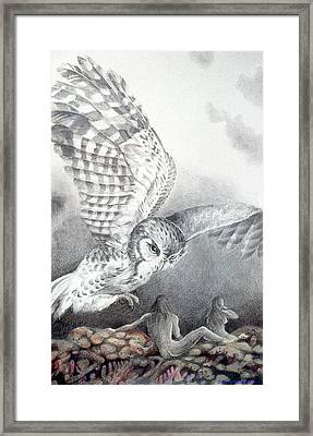 The Owl Of Athena Framed Print