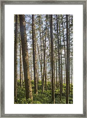 The Pacific Ocean Seen Through A Forest Framed Print by Taylor S. Kennedy