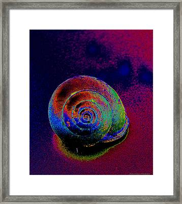 The Painted Shell Framed Print
