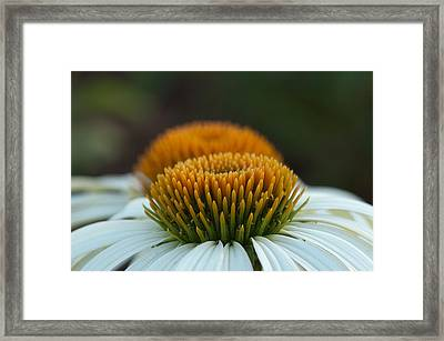 Framed Print featuring the photograph The Pair Of Coneflowers by Monte Stevens