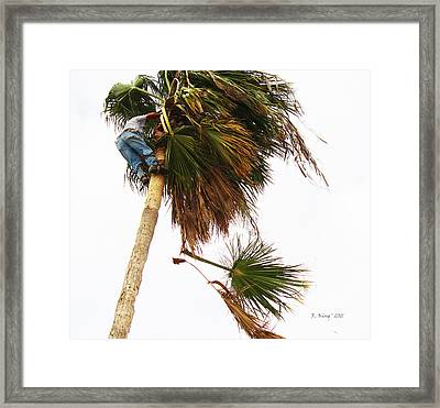 The Palm Tree Trimmer Framed Print