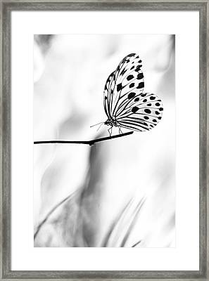 The Paper Kite Butterfly In Black And White Framed Print