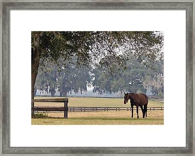 The Pasture Framed Print