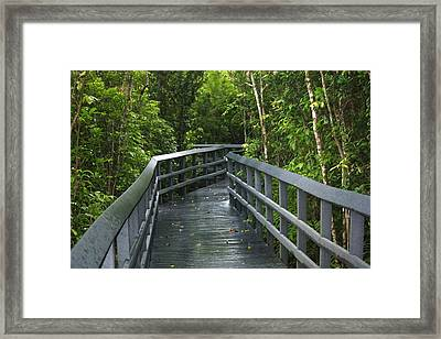The Path Framed Print by Andrea  OConnell
