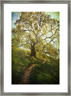 The Path To Brighter Days Framed Print by Laurie Search