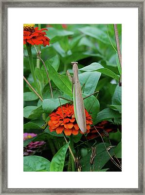 Framed Print featuring the photograph The Patience Of A Mantis by Thomas Woolworth