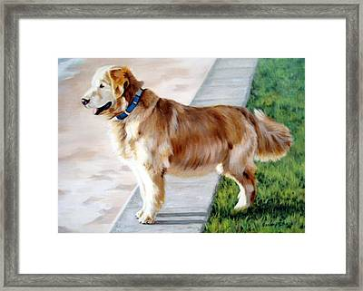 The Patient Golden Framed Print by Sandra Chase