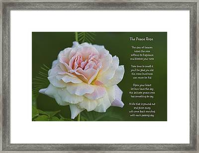 The Peace Rose Framed Print