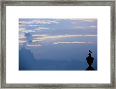 The Perfect Perch Framed Print by Ed Smith