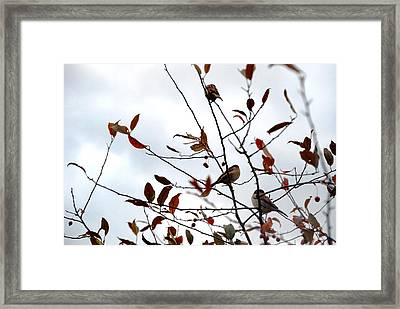 The Perfect Perch Framed Print by Jennifer Russo