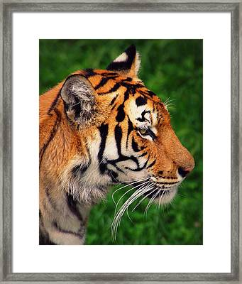 The Perfect Predator Framed Print