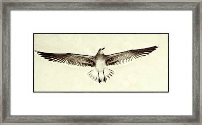 Framed Print featuring the photograph The Perfect Wing by Jim Moore