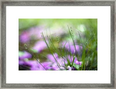 The Persuasiveness Of Nature Framed Print by Laura George