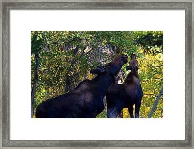 The Picnic In The Park Framed Print by Jim Garrison